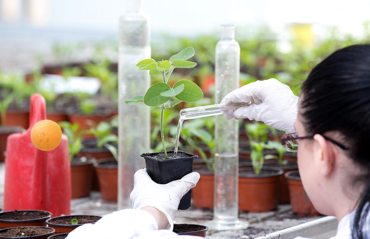 Clarke University Environmental Studies project taking place in campus greenhouse