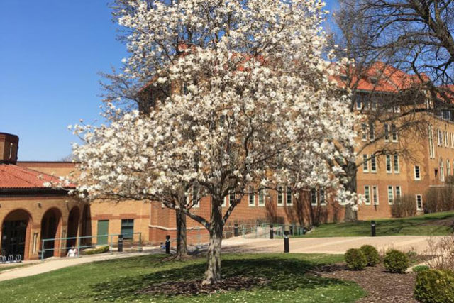 Blooming tree on campus